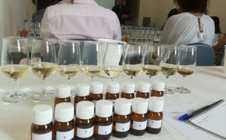 Curs gratuït de tast sensorial de suro en vi i cava