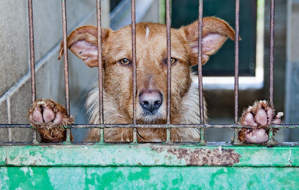 #socdelafamilia abandonament gossos estiu
