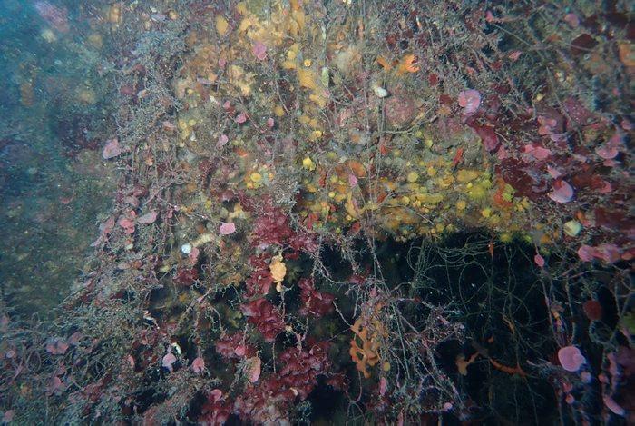 Localització d'arts de pesca perduts al mar de Llafranc