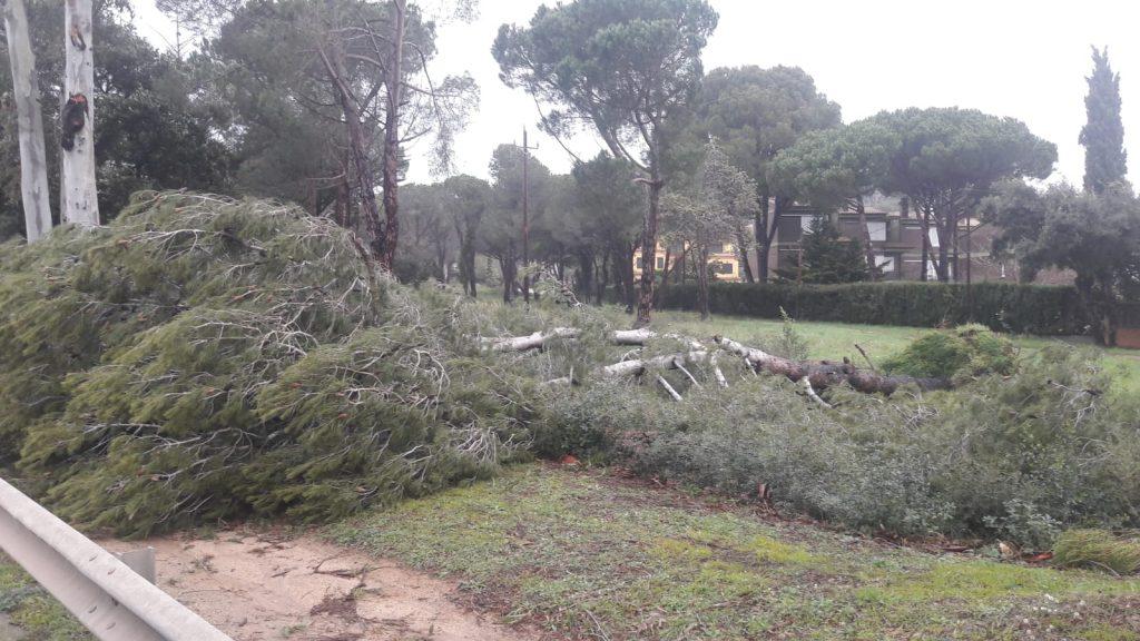 Palafrugell reclama una millor gestió forestal
