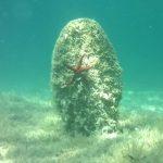 Nacres en perill d'extinció Fundació Mar