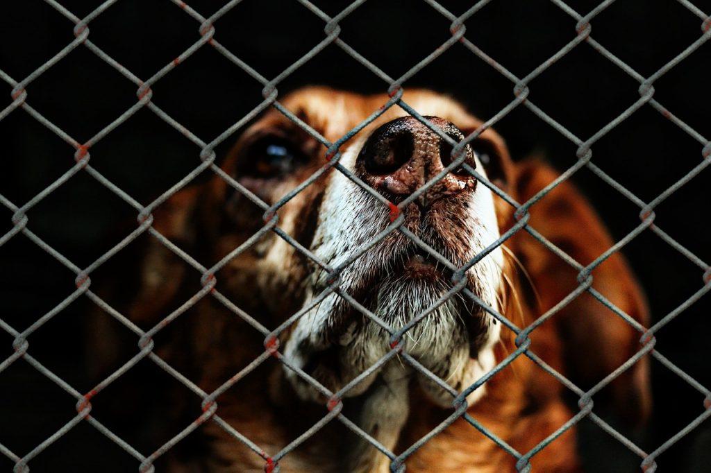 Rodamón recull més de 500 gossos el 2019