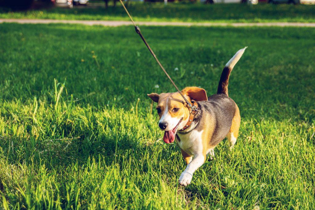 Passejar el gos 15 minuts i a 200 metres del domicili
