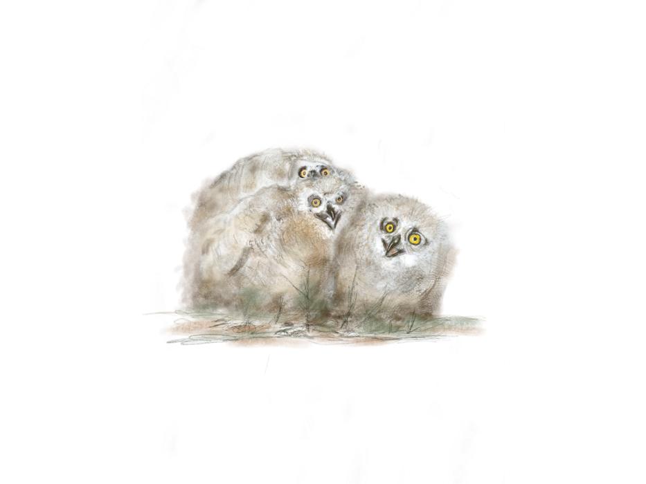 Els ocells i el suro protagonistes al Museu del Suro
