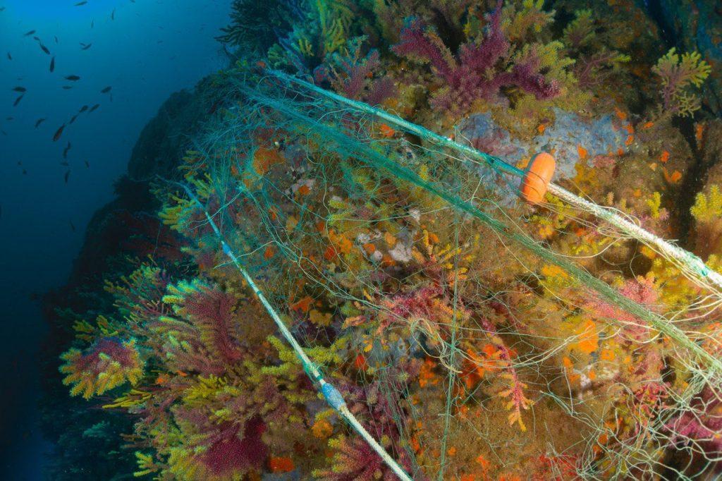 L'estat del fons marí del nostre litoral